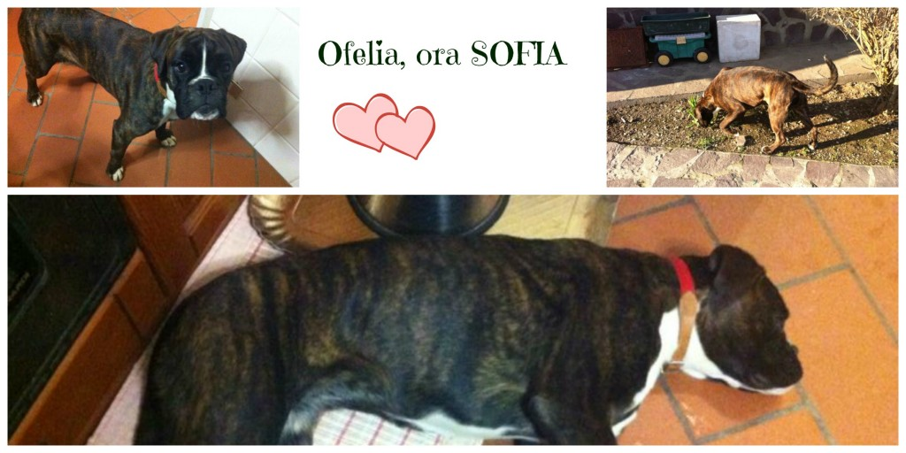 Ofelia a casa Collage
