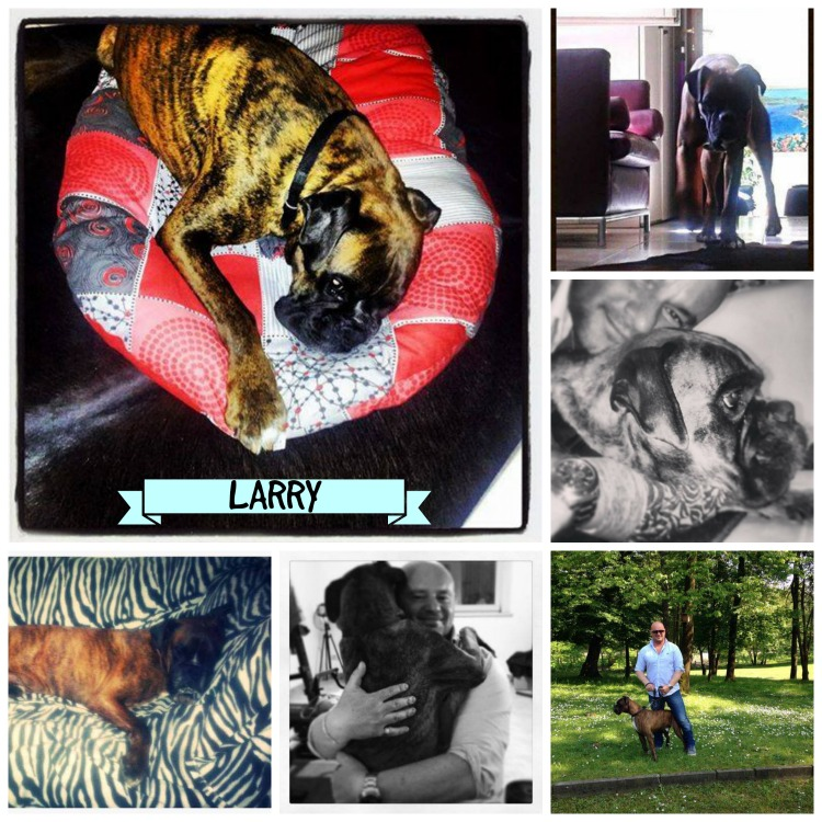 Larry a casa Collage