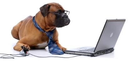 boxer-online-kursus