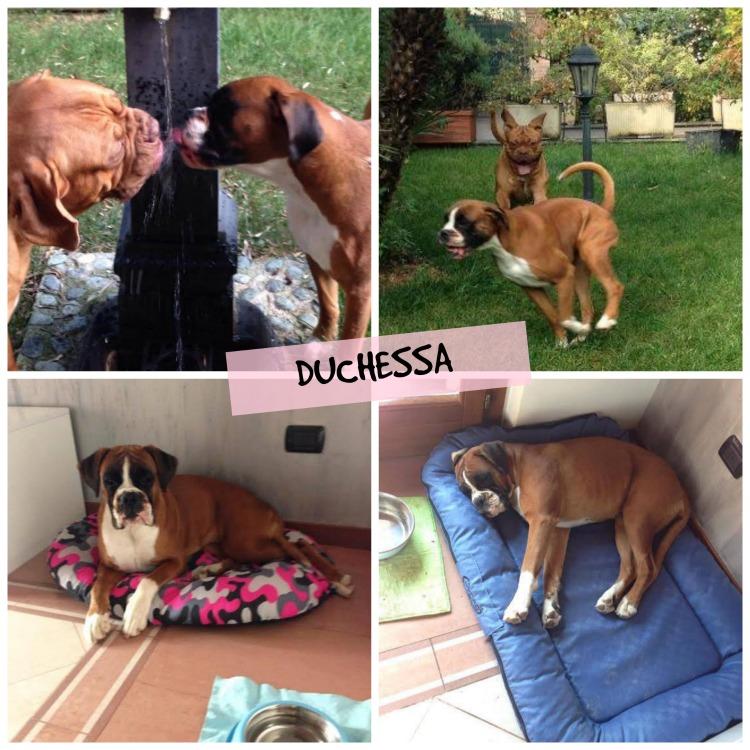Duchessa Collage