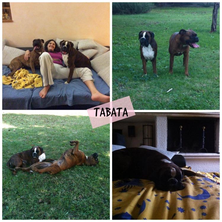 TABATA Collage