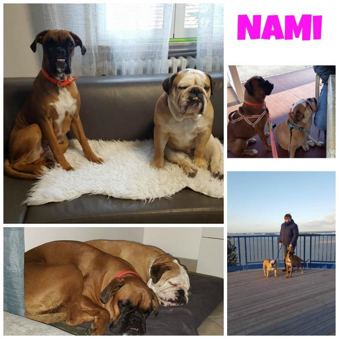 collage NAMI