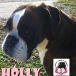HOLLY1