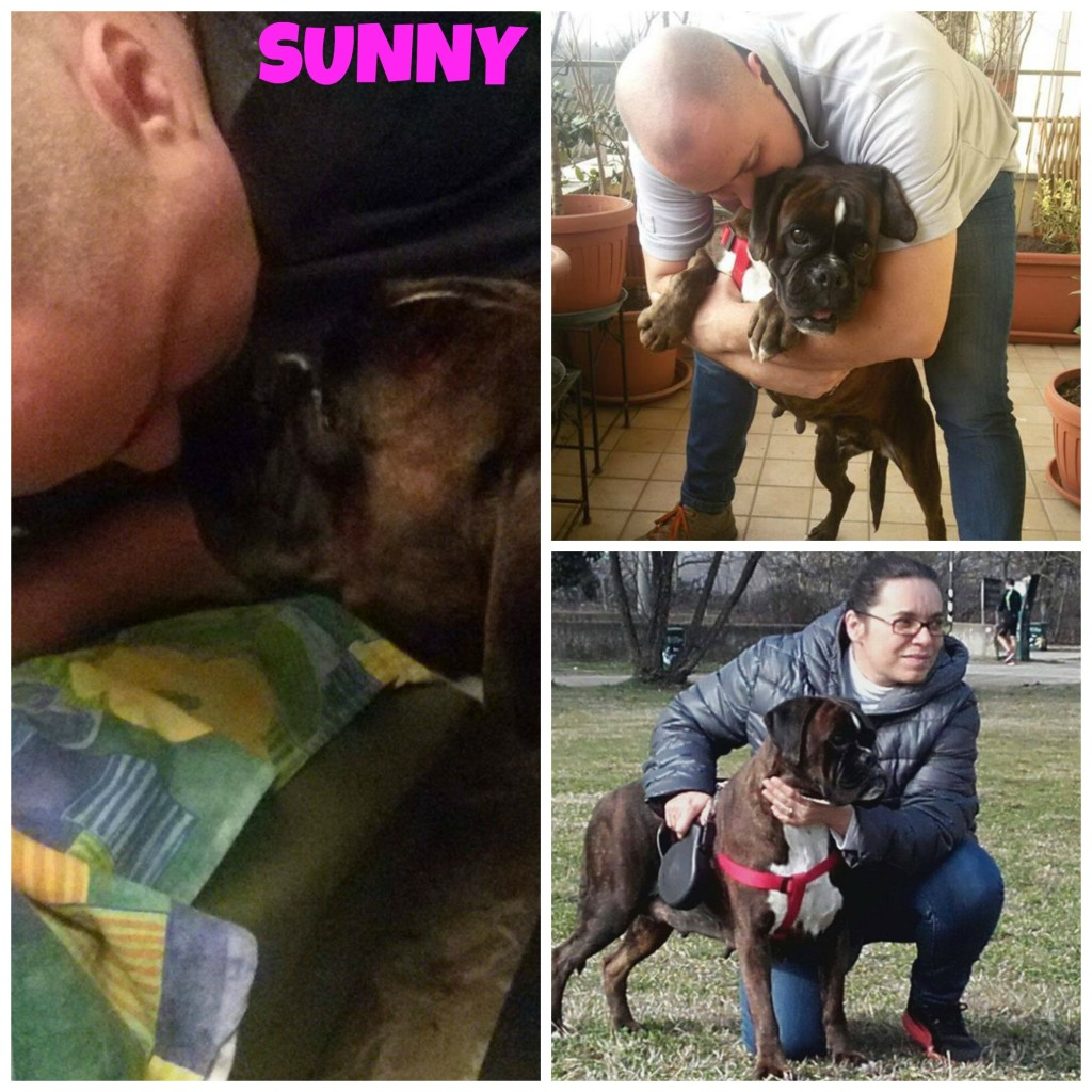 collage sunny